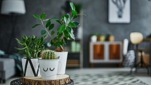 The only 2 plant trends you need to know about for 2020